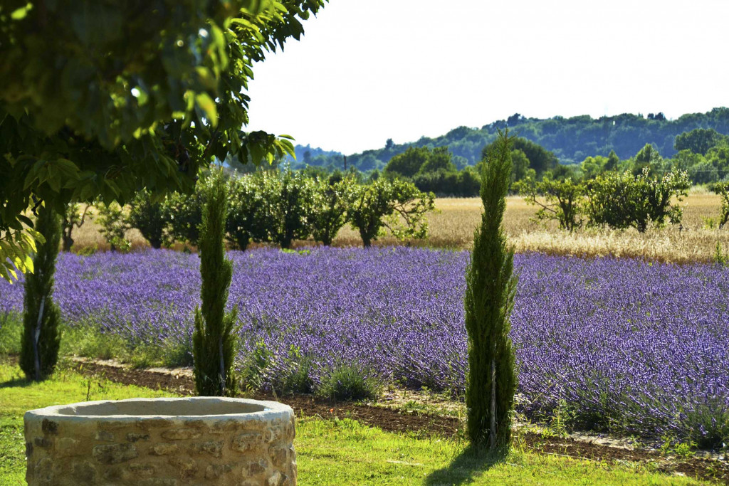Lavender field and view to Gordes