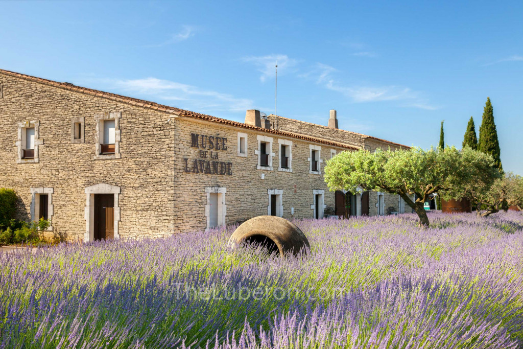 Lavender museum in Coustellet