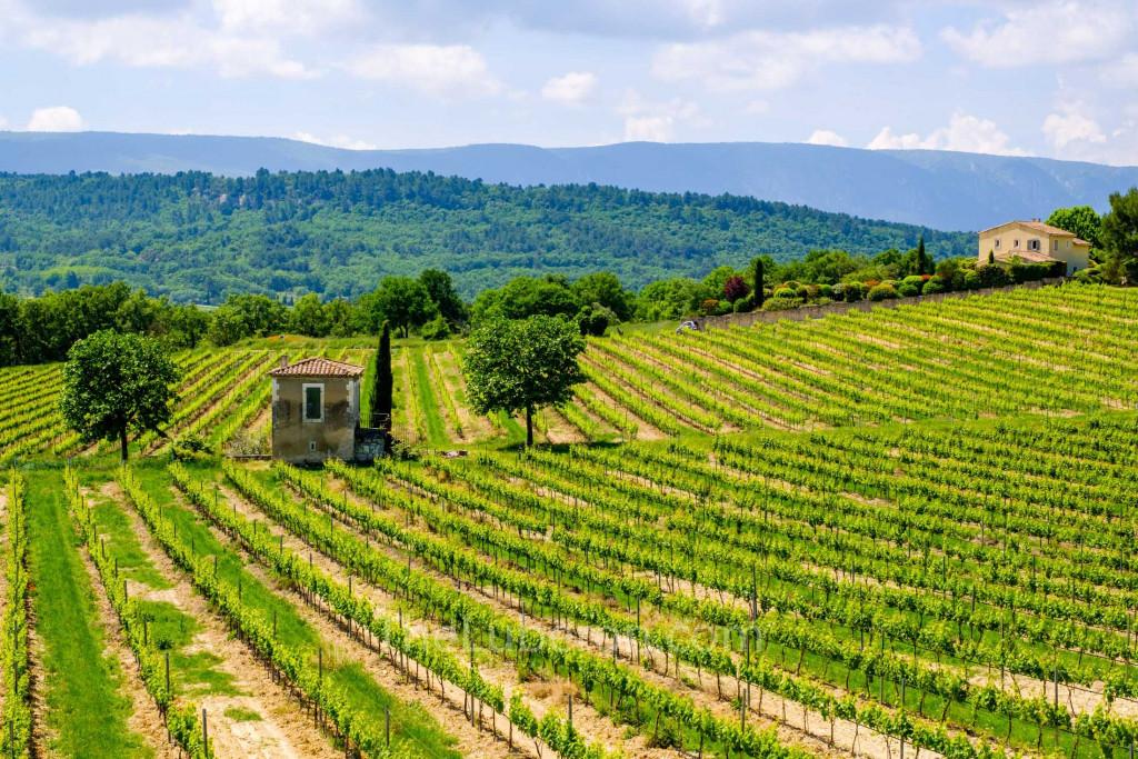 Goult vineyards