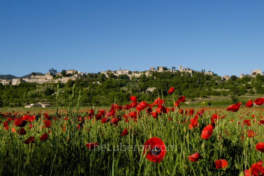 Menerbes with poppies