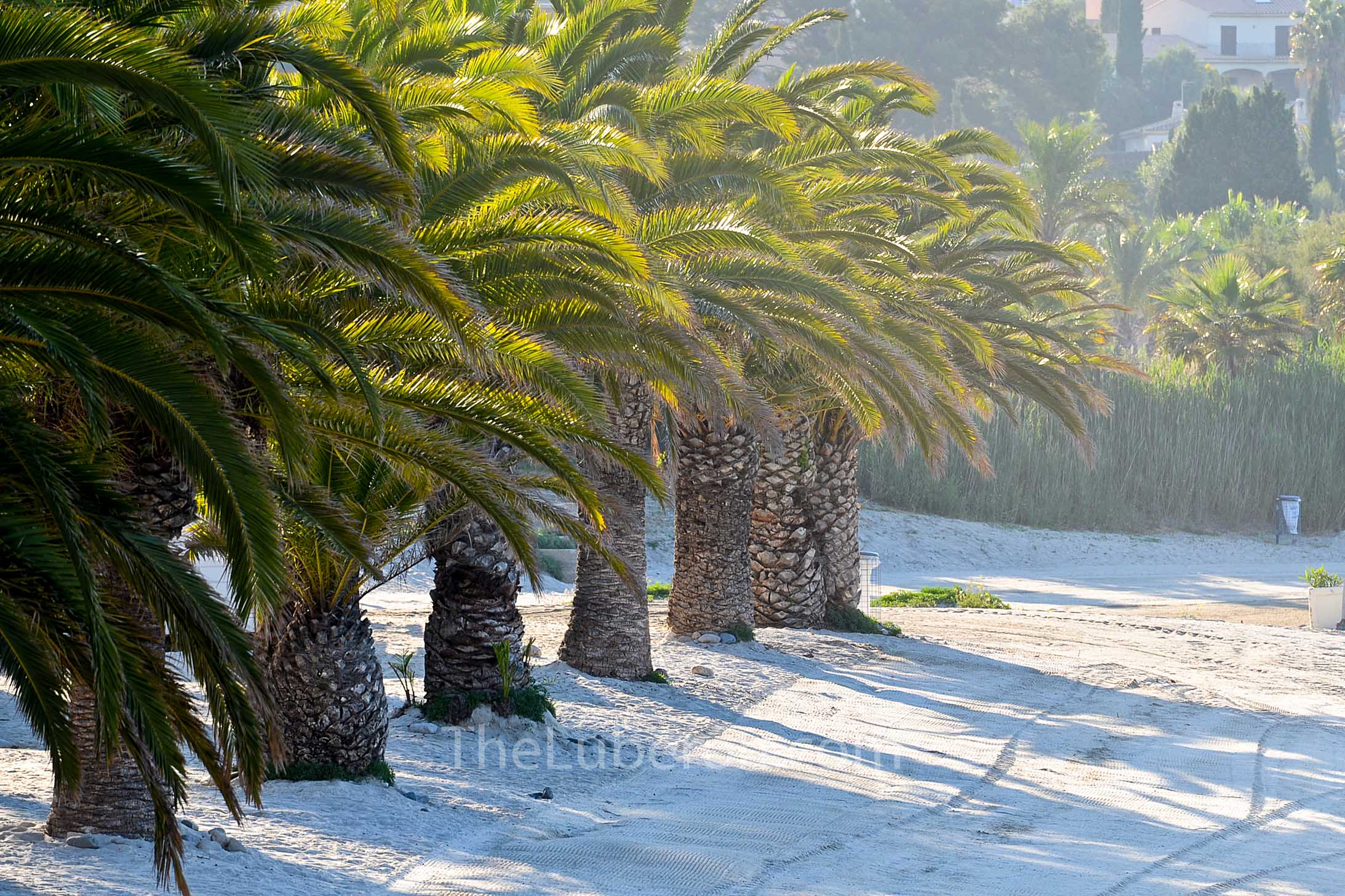 Palm trees on the beach in Bandol