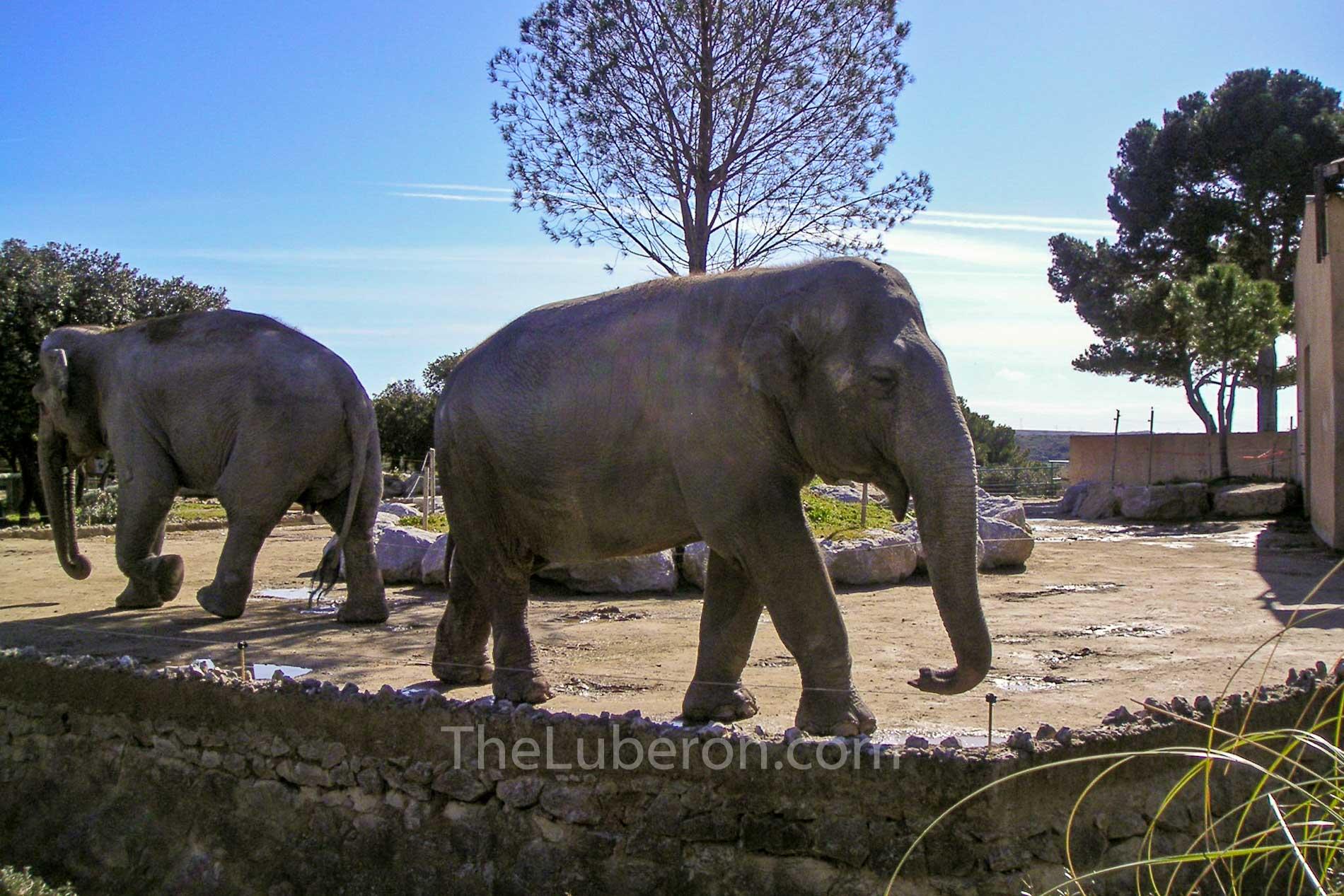 Elephants at Barben Zoo