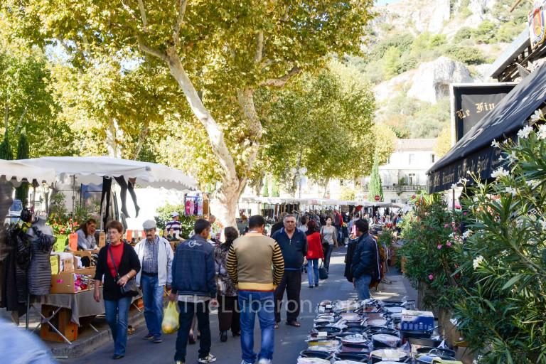 Plane trees at Cavaillon market