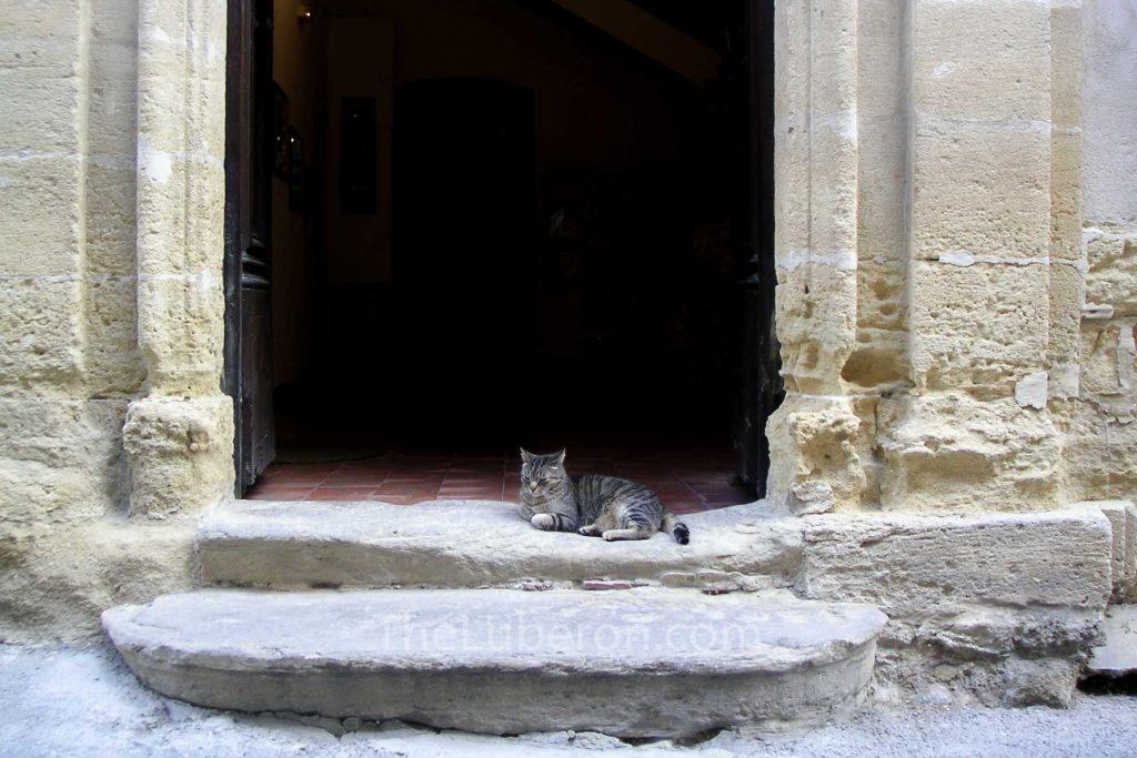Cat in doorway, Cucuron