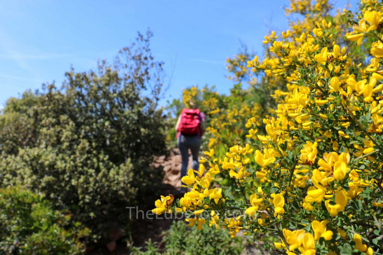 Hiker in the spring in the Luberon