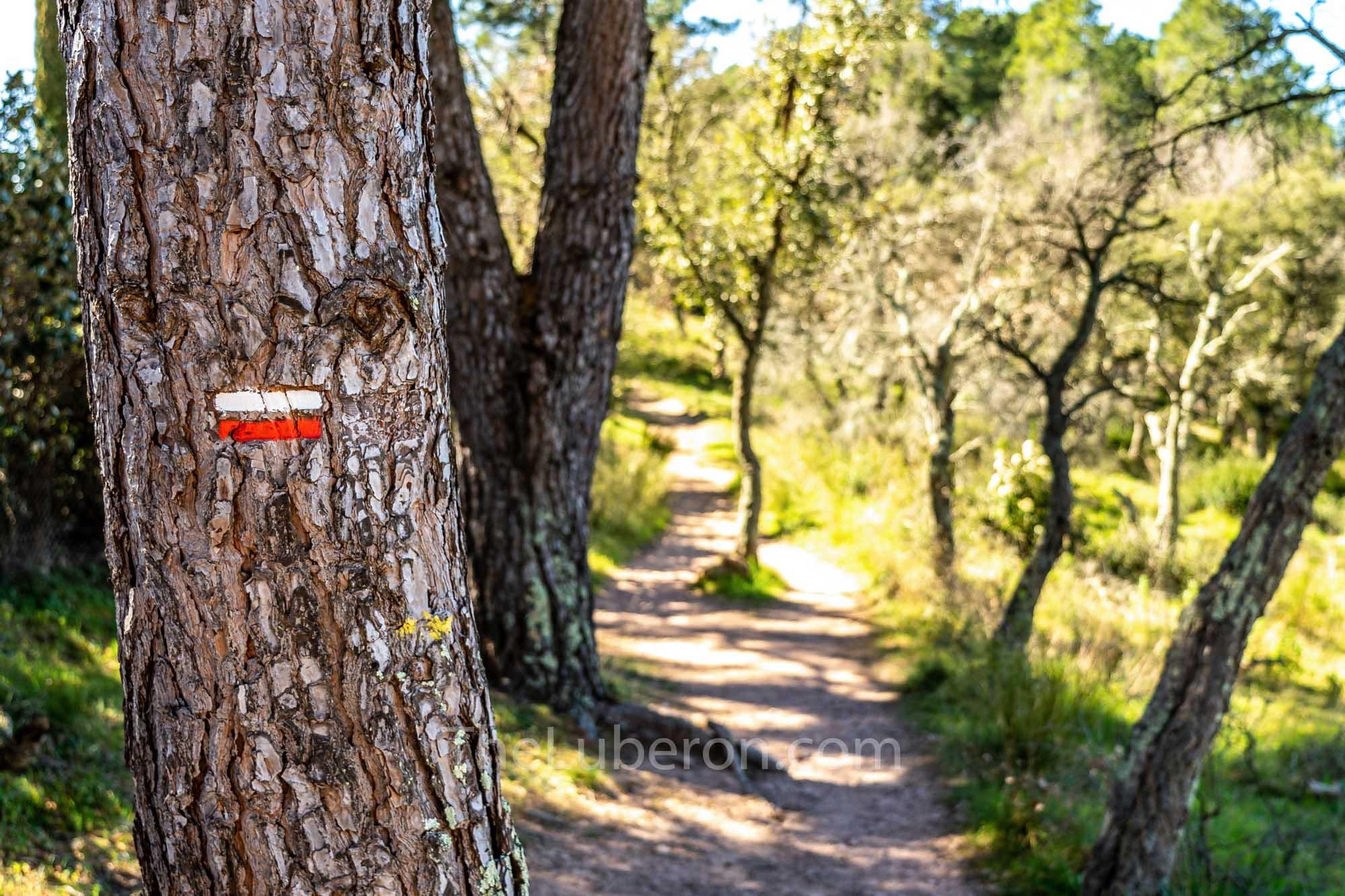 Sign on tree for a Grande Randonnée