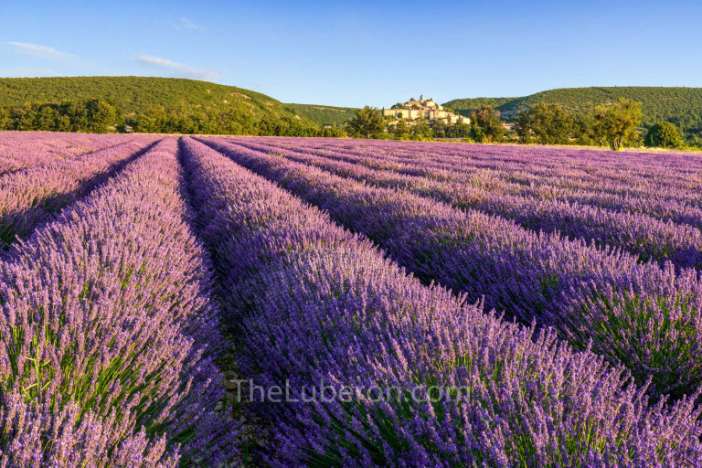 Provence lavender and village