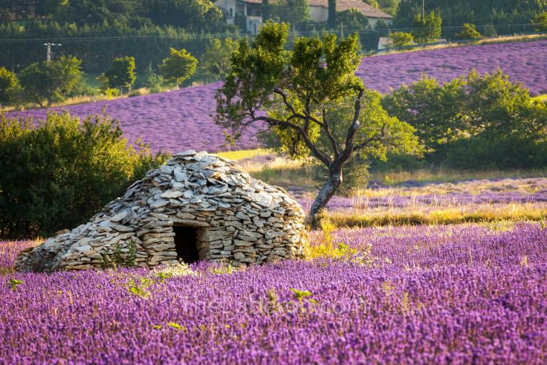 Borie hut in a lavender field in Sault