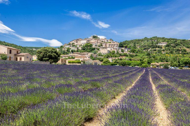 Lavender field and Simiane-la-Rotonde