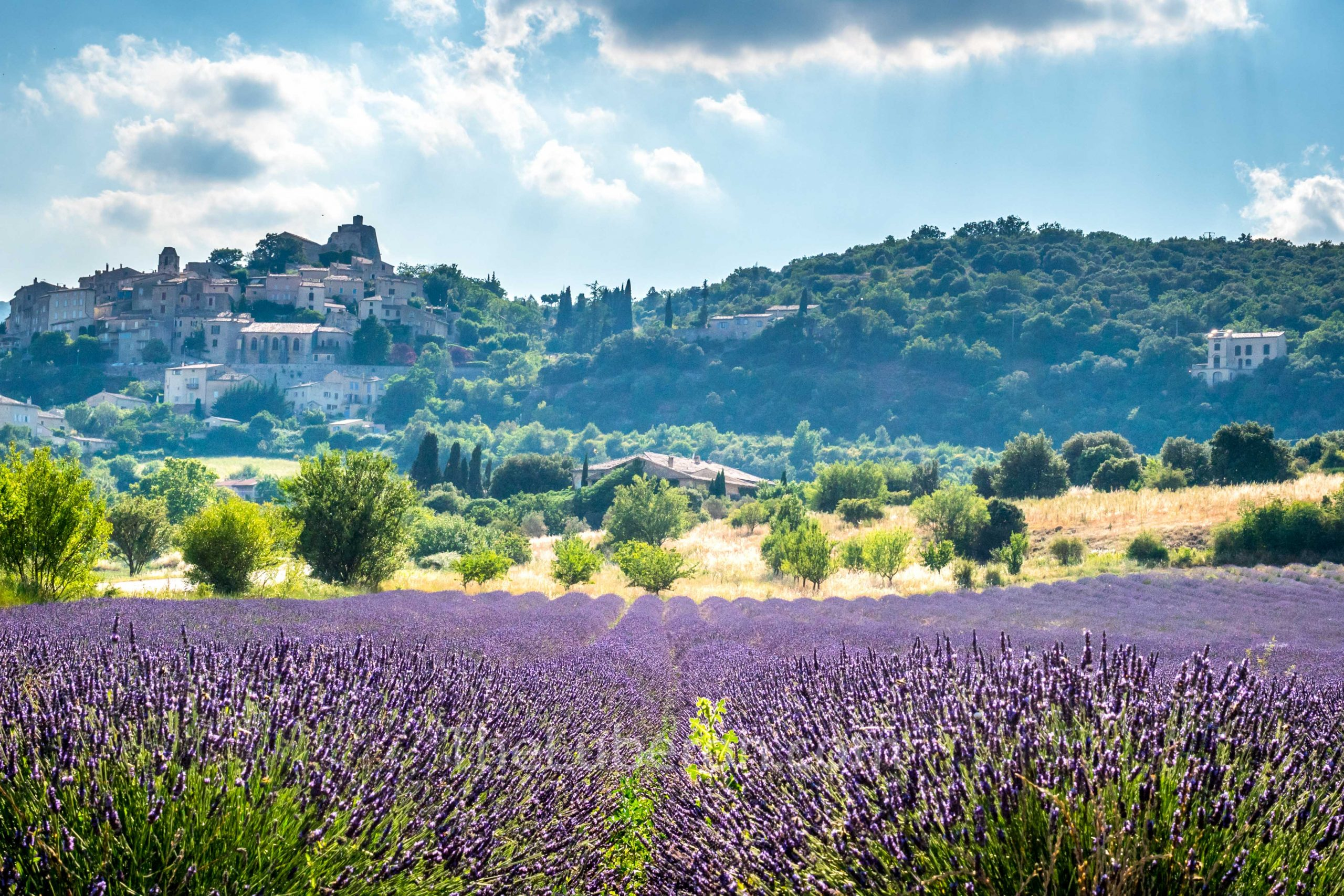 Simiane-la-Rotonde lavender fields