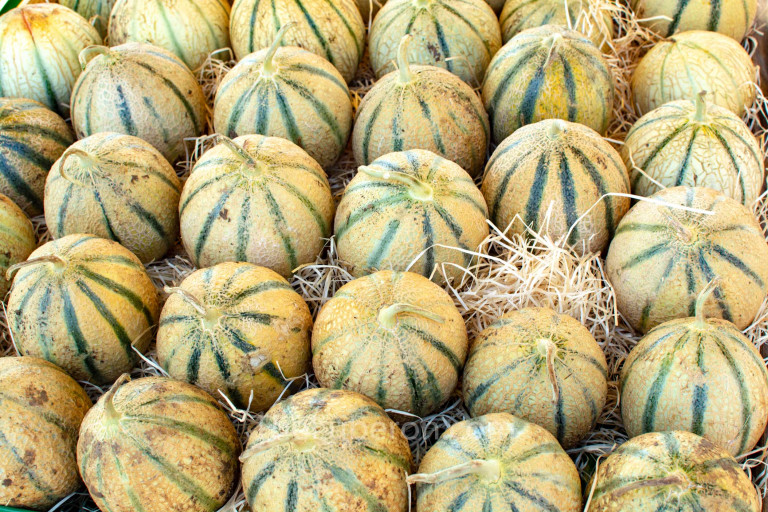 A stall of Cavaillon melons