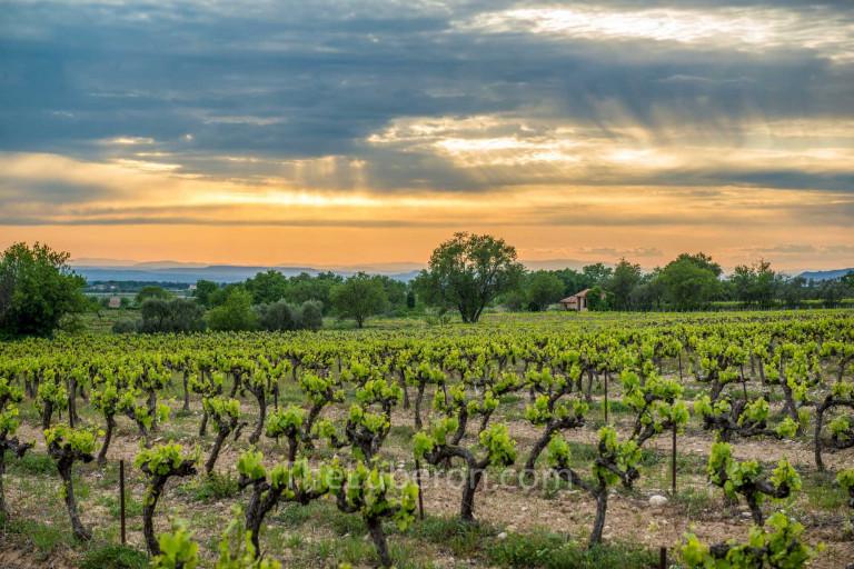 Luberon vineyard