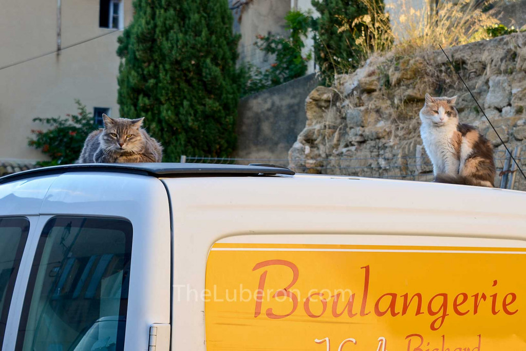 Cadenet cats